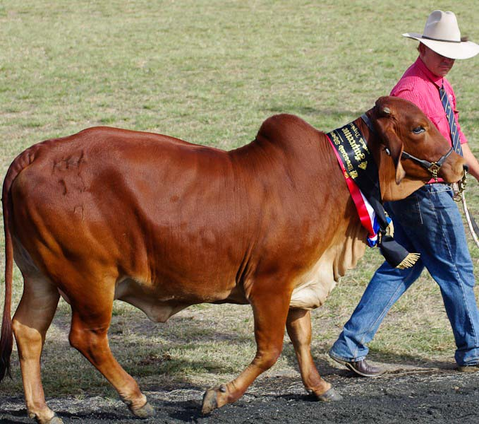 11-Boonah-Show-2011-10