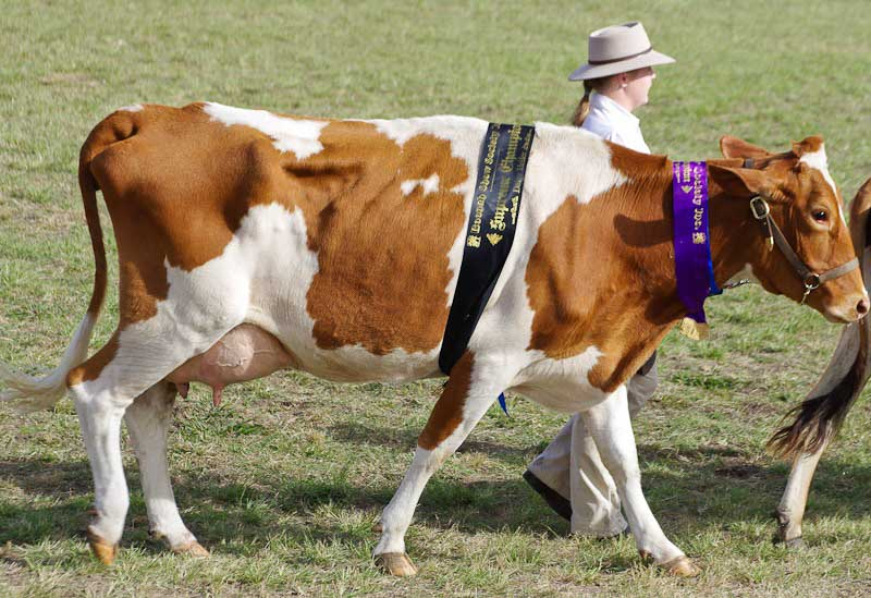 11-Boonah-Show-2011-15