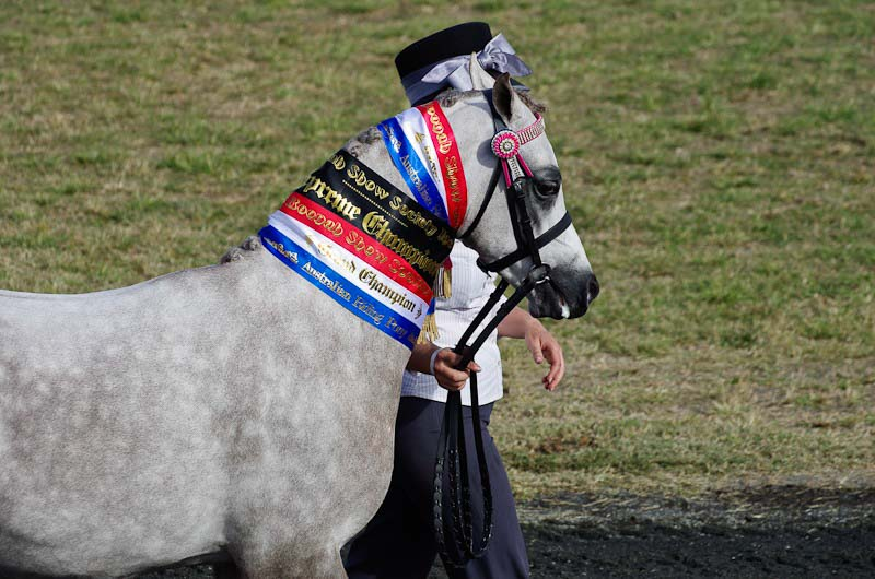 11-Boonah-Show-2011-horses-8